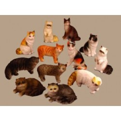 12Pc Cats