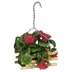 GERANIUM HANGING POT/RED