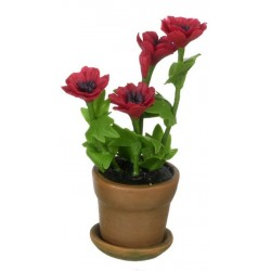 ANEMONE IN POT/RED
