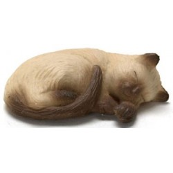 CAT, SIAMESE BROWN