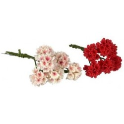 GERANIUM W/O LEAF, 6PC, RED
