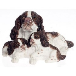 ENGLISH SPRINGER SP