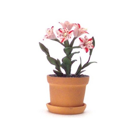 MAGIC PINK LILIES IN POT