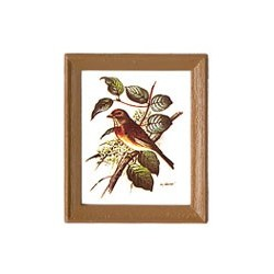 FRAMED BIRD PICTURES 4 PCS