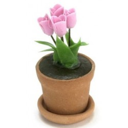 Tulip In Clay Pot, Pink