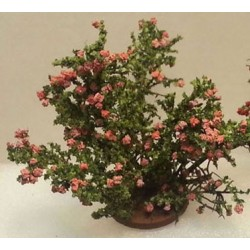 Rose Bush Small Pink