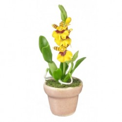 Oncidium Orchid/yellow